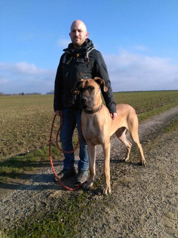 Lancelot, Dogue Allemand
